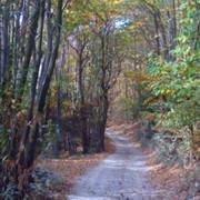 strada-bosco-OK-450x450